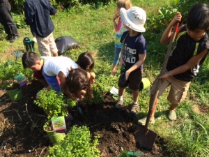 Planting Blueberries at August 2015 Celebration