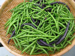 Fresh beans from the garden